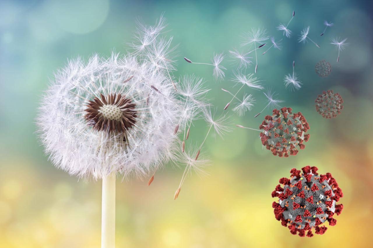 foto fiori e particelle di covid